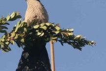 BirdsInMyGarden