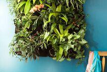 Green Walls - Living Paintings / Smaller, wall-mounted, non-permanent green walls