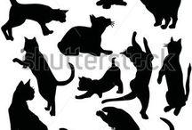 Animais - Cats