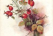 Цветы природа букеты