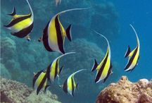 Gambar Jenis-Jenis Ikan Terlengkap