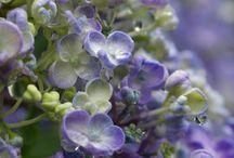 Garden - Pretty flowers