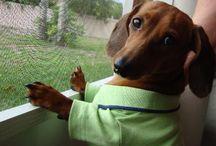 I luvs my wiener!