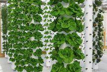 giardinaggio / piante e fiori