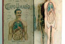 Anatomia - il corpo umano