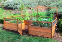 Groente tuin kinderd
