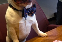 Pets in bow ties. / Our furry little friends look great in bow ties too!