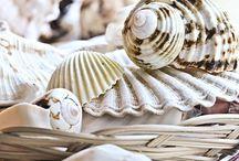 Sea , shells