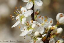 Vårkjensler