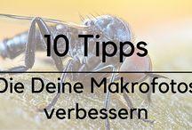 Makrofotografie Tipps und Tricks / Tipps und Tricks zur Makrofotografie