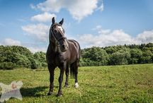 Equine photography by Wings Photography