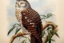 John Gould the Bird Man