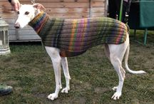 Galgo pullovers