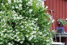 Blomstrende buske