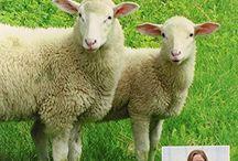 Farm Critters