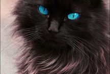 Pretty Interesting Kitty! / Striking looking kitties - different color eyes, tall ears, hairless kitties...