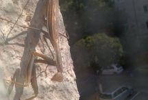 MyPhotos ~insect~