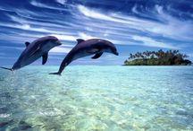 ANIMAL • Dolphin