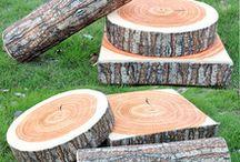 tronco de árvores