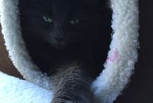 Tiffy / Our new kitty Tiffy. Dec 14 2014.