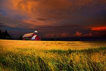 Barns / by Megan Woods