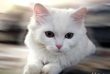Gatos / Adoro gatinhos