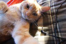Kedi Selfie / Kedilerin Selfieleri