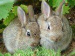Bunny Berries / My first homestead money-making project...it's a win-win!! / by Teresa Fleming