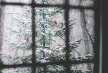 Winter / Wintery things