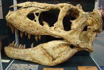 Archaeology,Paleontology,Mythology &Geology