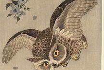 Owls / Sowy