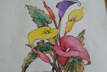 My Colouring In / Pages I have coloured using Polychromos & Jasart, Pencils.