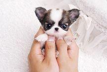 Kleine puppies