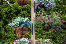 Virágok az udvarra
