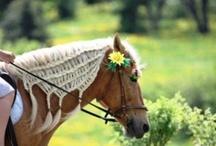 Paardenvlechten