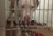 We need to help..... X / Animal rescue
