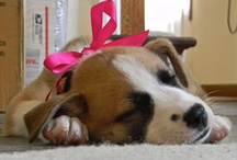 """Puppy Love / """"A dog is the only thing on earth that loves you more than he loves himself."""" / by Sydney Becker"""
