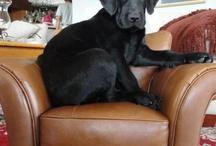 Roxy The Dog