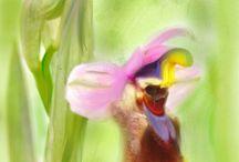 orquideas naturales