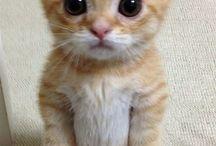 Sarman, Duman, Tekirr..! / Kediler, kedilerim.. Sarmanlarim, dumanlarim, tekirlerim.. Sevgili can yoldaslarim, Nes'elerim, vazgecilmezlerim..!