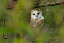 Birds / So free and so gorgeous. I especially love owls, can't help it.