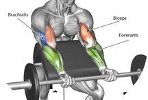 Muskler