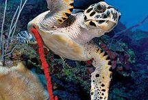 Underwater Cayman