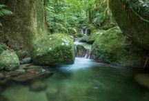 Daintree Rainforest Activities / We offer a range of activities to suit all travellers; from high flying canopy tours, to relaxed strolls through ancient rainforests.