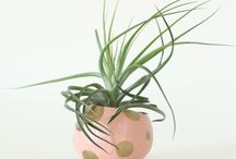 plant-tastic / Bring the outdoors in to add beauty and cleaner air.  Win-win!