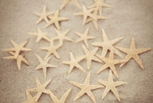 Salt and Sand Design / by Tracy Gaskins