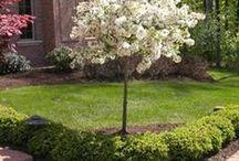 kvitnúce mini stromy