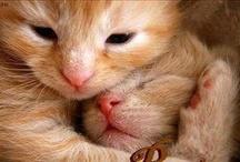 Kitty / by Shana Klick