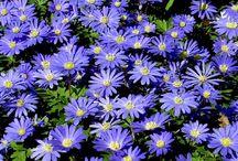 Blomsterløg
