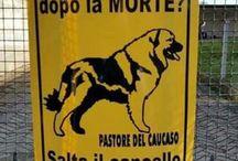 Ocio al can